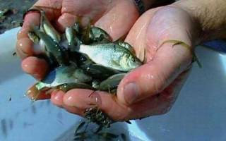 Рыбалка на малька