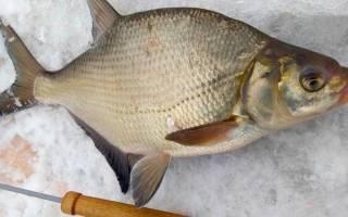 Рыбалка на леща на волге