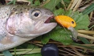 Как ловить форель на спиннинг