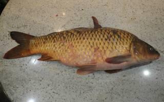 Сазан костлявая рыба или нет
