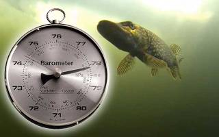 Как атмосферное давление влияет на рыбу
