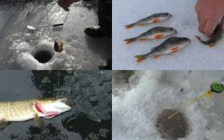 Хитрости рыбалки на удочку