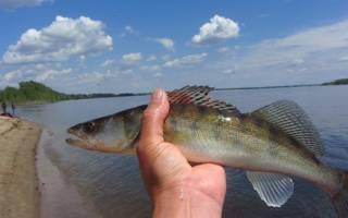 Рыбалка в окрестностях
