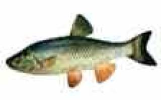 Календарь клева пресноводных рыб