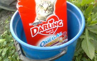 Ловля рыбы на кошачий корм