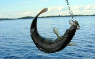 Рыбалка на волге базы