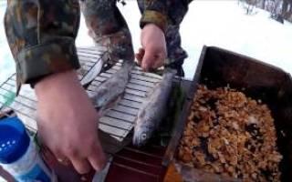 Подготовка рыбы к холодному копчению