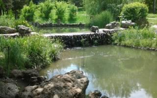 Чем кормить карасей в домашнем пруду