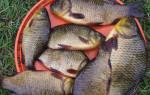 Рыбалка на карася летом