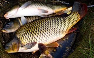Блюда из рыбы на природе