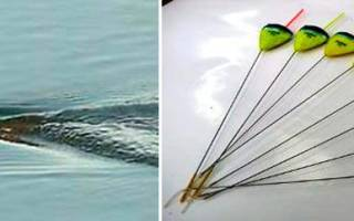 Купить плоские поплавки для ловли на течении