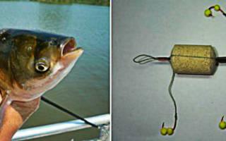 Как ловить толстолобика на технопланктон