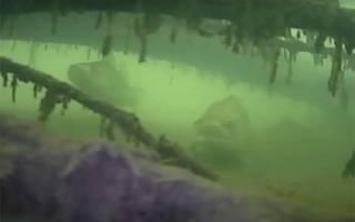 На что ловить судака летом