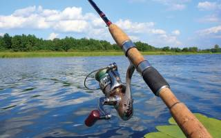 Обучение рыбалке