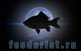 Зависимость клева рыбы от фазы луны