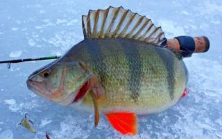 Рыбалка на балду