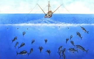 Троллинг что это такое в рыбалке