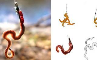 Насадка червя на крючок способы